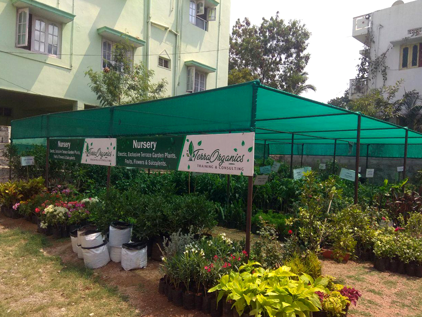 Terra Organics - Sainikpuri - EXOTIC, EXCLUSIVE TERRACE GARDEN PLANTS,  SUCCULENTS, CRAFTED READY TO FRUIT PLANTS, NURSERY, FLOWERS, RED SOIL,  COCOPEAT, VERMICOMPOST AND GROW BAGS.   Zone Adds